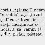 Font Excelsior 10 pt. Scanned at 600 dpi. Selected words with diacritics, from V. K. Arseniev book.
